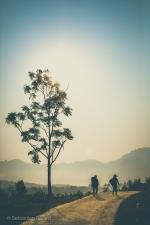 An early morning sunrise over the rice fields and paths of rural Vietnam. March, 2014.