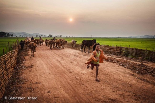 A little girl runs home while the cattle get driven in for the evening near Lak Lake village, Vietnam.