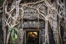 In the temple of Ta Prohm, it's clear that the forest is trying to reclaim the stones. Angkor, Cambodia, March 2014.