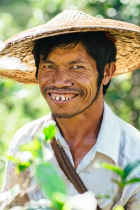 A Palaung man smiles for us while harvesting tea leaves in the evening outside Hsipaw, Myanmar, May 2014.