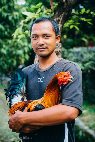 A young Balinese man shows off his prize rooster during a cock fight training session outside Ubud. Indonesia, June 2014.