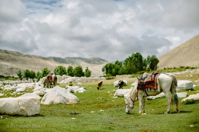 Our mountain horses relax and chow down while we visit the Tibetan village monastery;