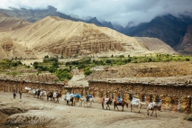A horse and mule train help carry supplies and equipment to the remote villages of Upper Mustang. Nepal, July 2014.